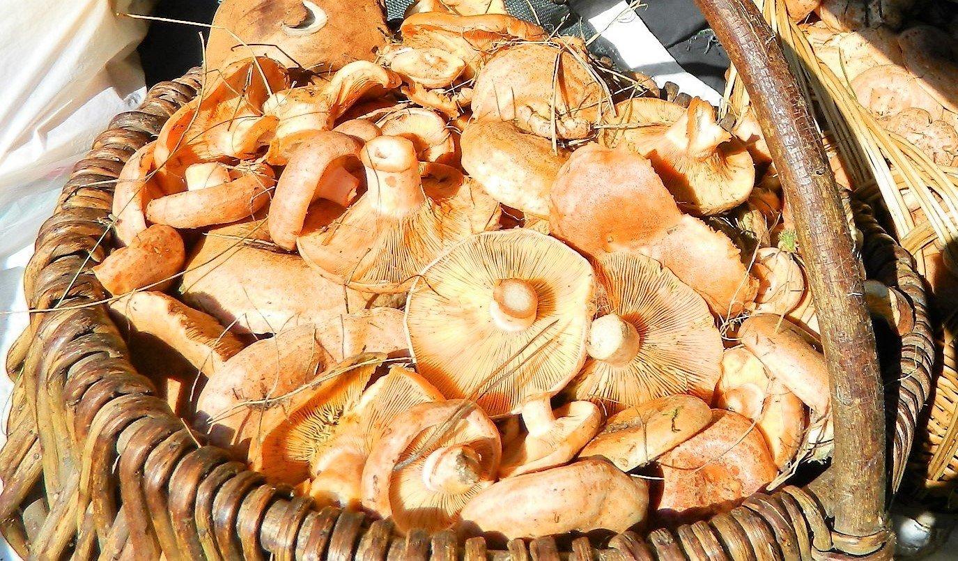 сколько лет хранятся сухие грибы